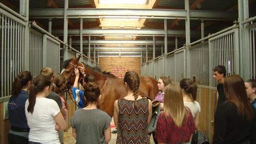 animation filière cheval